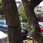 Tree Maintenance at Intersection of Cumberland St & Noe St