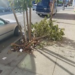 Tree Maintenance at Intersection of 17th St & Connecticut St