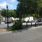 Tree Maintenance at Intersection of Hickory St & Octavia St
