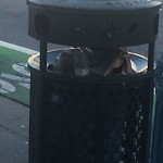 Garbage Containers at 4 THE EMBARCADERO