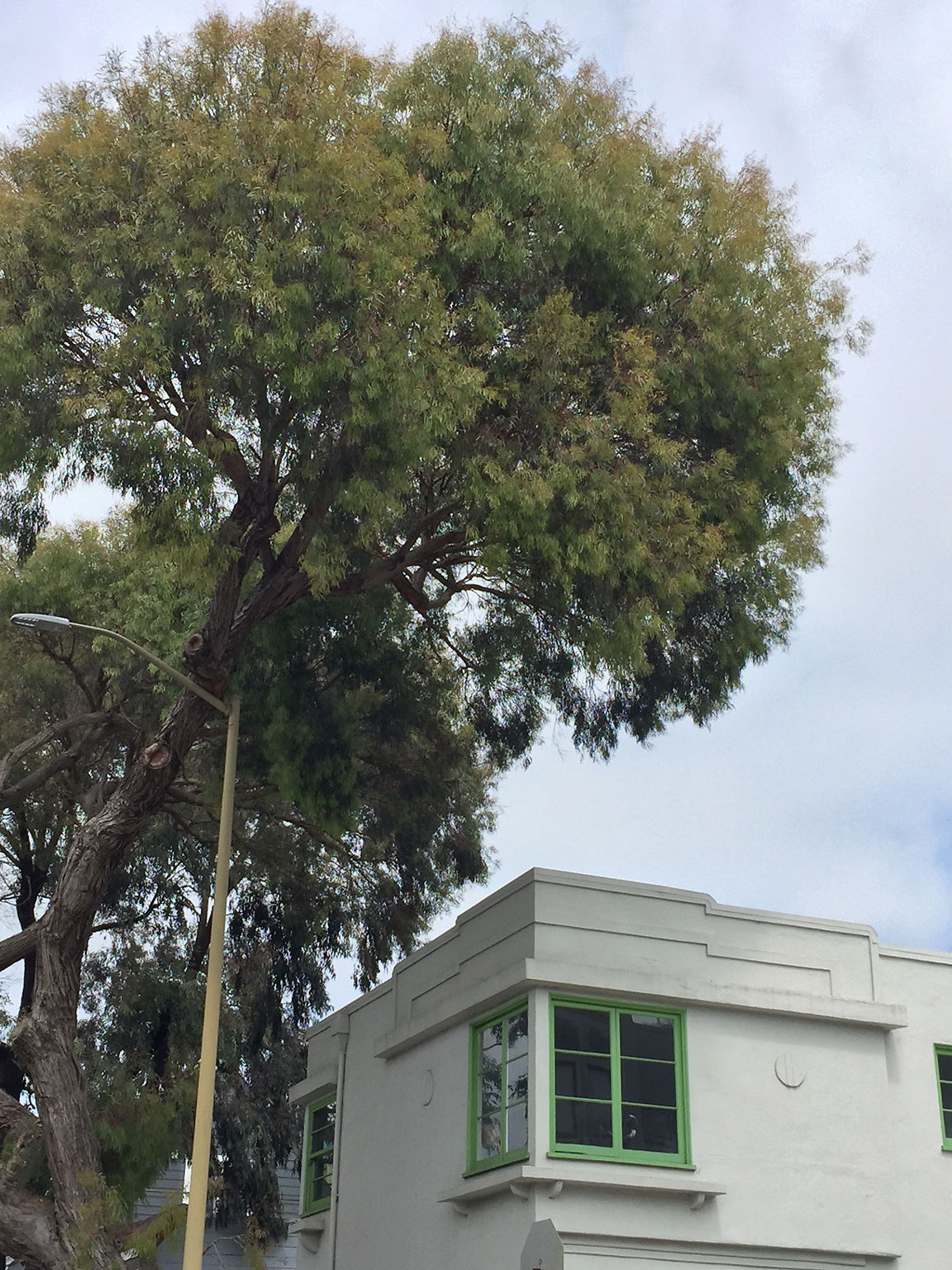 Tree_branch_leaning_on_light_pole_and_above_roof