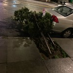 Tree Maintenance at Intersection of Taraval St & 28th Ave