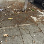 Street or Sidewalk Cleaning at 1304 Pacific Ave
