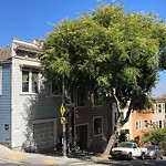 Tree Maintenance at Intersection Of Stoneman St & Folsom St