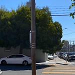 Tree Maintenance at Intersection Of Goettingen St & Wayland St