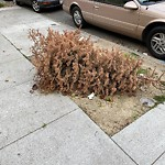 Holiday Tree Removal at 1225 7th Ave