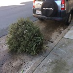 Holiday Tree Removal at 2270 California St