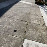 Street or Sidewalk Cleaning at 519 Holloway Ave