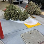 Holiday Tree Removal at Intersection Of Beach St & Divisadero St